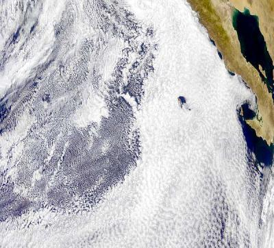 Why is Pacific cold; and Baja hot?  The role of low clouds in albedo